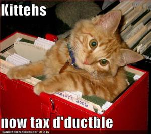 funny-pictures-kittens-are-now-tax-deductible